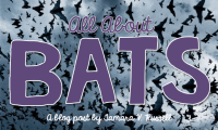Peek at My Week: All About Bats