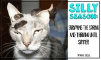 Surviving Silly Season